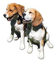 Beagles, Carlos & Pablo